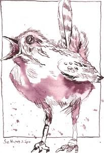 Zaunkönig - Zeichnung von Susanne Haun - 22 x 17 cm - Tusche auf Bütten