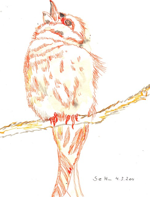 Buchfink - Zeichnung von Susanne Haun - 22 x 17 cm - Tusche auf Bütten