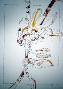 Forsysthie - Zeichnung von Susanne Haun - 70 x 50 cm - Tusche auf Hahnemühle Bamboo Papier
