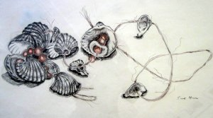 Muschelkette II - Zeichnung von Susanne Haun - 50 x 70 cm - Blei- und Buntstift auf Papier