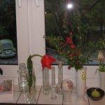 Der Blütenzweig paßt prima auf mein Küchenfensterbrett - Foto von Susanne Haun