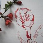 Ausschnitt Blütenzweig - Zeichnung von Susanne Haun - 40 x 30 cm - Tusche auf Hahnemühle Toscana rau