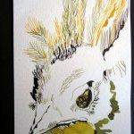 Amsel 4 - Zeichnung von Susanne Haun - 10 x 15 cm - Tusche auf Hahnemühle Bütten