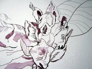 Ausschnitt Rhododendron Zeichnung von Susanne Haun