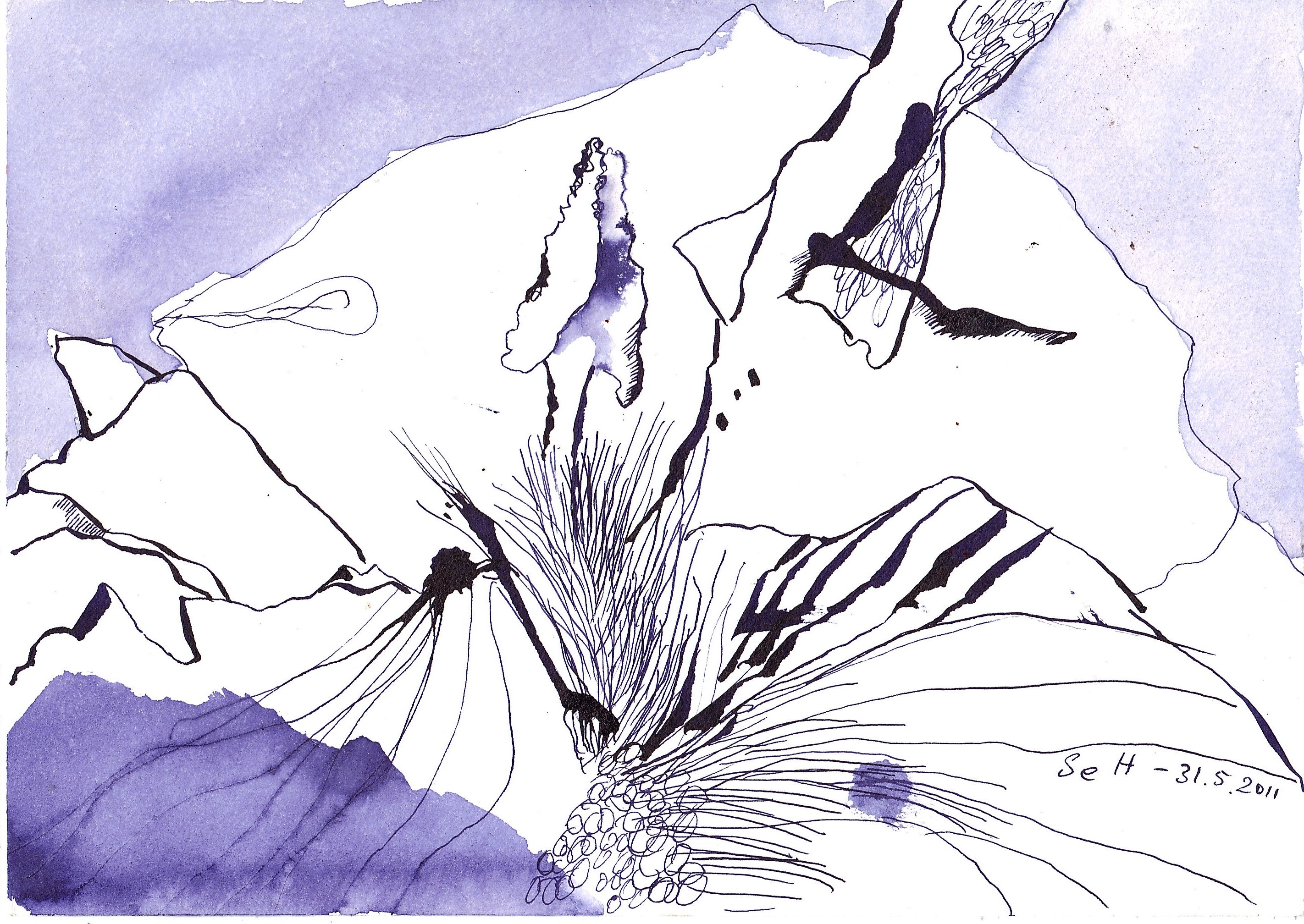 Schwertlilie II - Zeichnung von Susanne Haun - 17 x 24 cm - Hahnemühle Burgund 250 g/m²