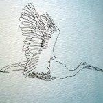 Wie ein Engel fliegt der Vogel durch die Rolle - von Susanne Haun