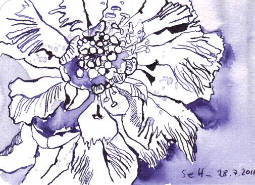 Lila Blüte 1 - Zeichnung von Susanne Haun - 10 x 15 cm - Tusche auf Bütten