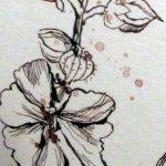 Detail der Stockrose - Zeichnung von Susanne Haun