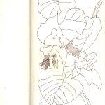 Skizze Blätter von Susanne Haun
