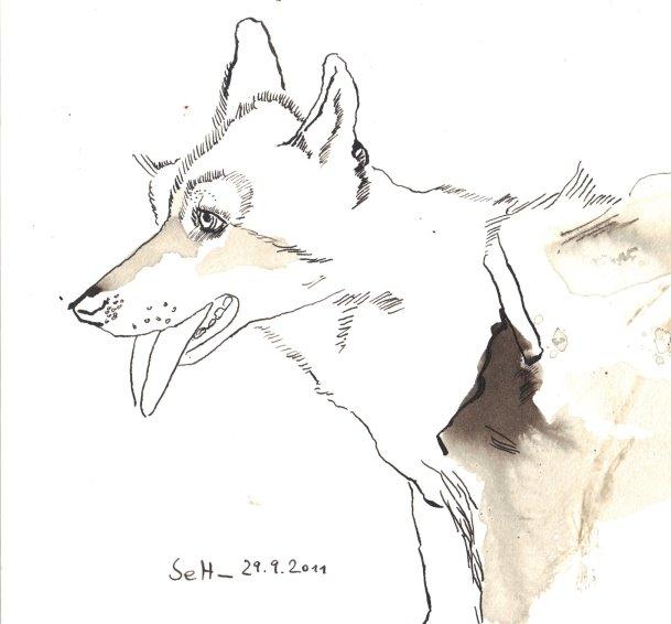 Indiga - Zeichnung von Susanne Haun - 24 x 17 cm - Sepia auf Burgund Hahnemühle