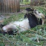 Panda BoaBoa - Foto von Susanne Haun