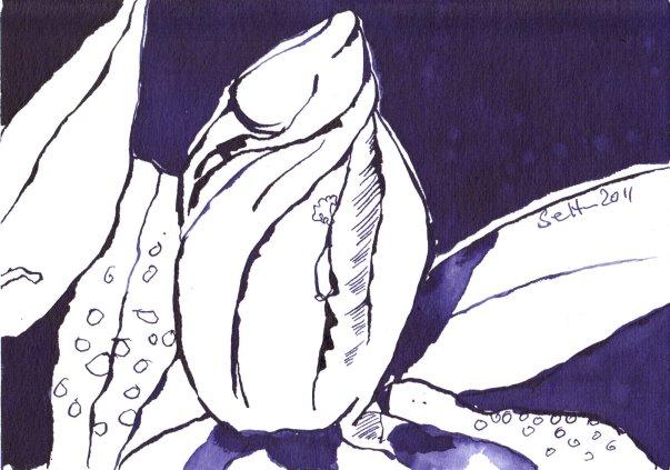 Herbstenzian Vers. 1 - Zeichnung von Susanne Haun - Tusche auf Bütten - 12 x 17 cm