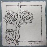 Entstehung Hibiskus Vers. 2 - Zeichnung von Susanne Haun - Tusche auf Silberburg - 10 x 10 cm