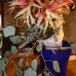 Annette Pehnts Blumen - Foto von Susanne Haun