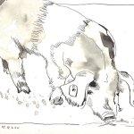 Hausferkel - Zeichnung von Susanne Haun - 17 x 22 cm - Tusche auf Bütten