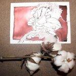 Meine Zeichnungen und die Baumwolle im Vergleich - Foto von Susanne Haun