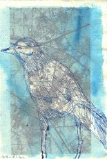 Beobachtung 2 Krähe - ÜberZeichnung von Susanne Haun - Tusche auf Bütten - 30 x 20 cm