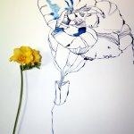 Entstehung Freesie und Größenvergleich (c) Zeichnung von Susanne Haun (2)