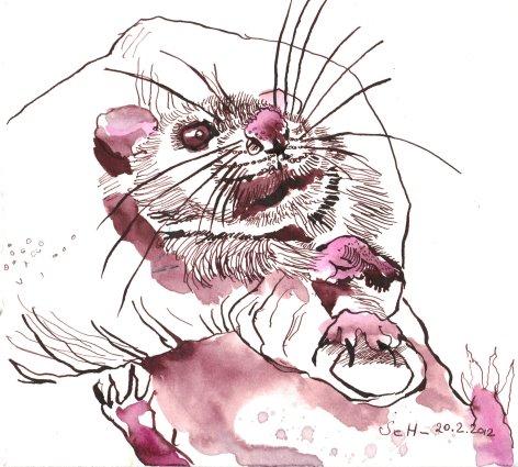 Ratte - Zeichnung von Susanne Haun - Tusche auf Bütten - 20 x 20 cm