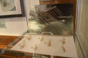 Modelle vom Lilienthal Gleiter im Steglitz Museum (c) Foto von Susanne Haun