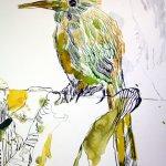 Ausschnitt Kolobri Eldorado (c) Zeichnung von Susanne Haun
