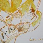 Detail Knospe GELB (c) Detail Zeichnung von Susanne Haun