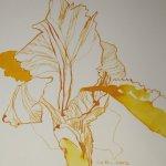 Iris Version 1 15 x 15 cm Tusche auf Bütten (c) Zeichnung von Susanne Haun