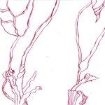 Geschnittene Rosen Teil 2 17 x 22 cm (c) Zeichnung von Susanne Haun