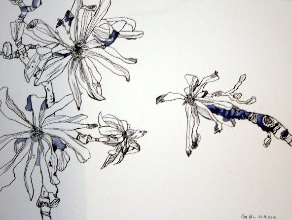 Verblühte Magnolien 30 x 40 cm Tusche auf Bütten (c) Zeichnung von Susanne Haun