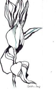 Enzian 17 x 12 cm Tusche auf Bütten (c) Zeichnung von Susanne Haun