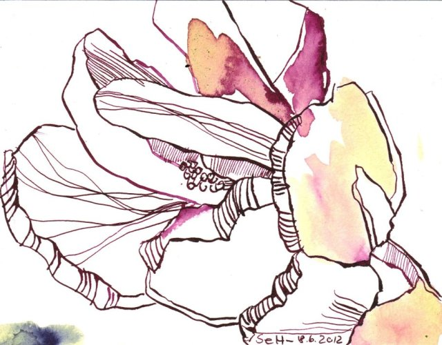 Himbeer farbende Blumen 12 x 17 cm Tusche auf Bütten (c) Zeichnung von Susanne