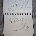 Libelle am Montone (c) Zeichnung von Susanne Haun