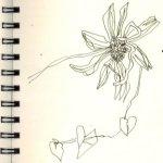 Gelbe Blumen (c) Zeichnung von Susanne Haun