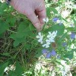 Es wachsen überall Blumen am Montone (c) Foto von Susanne Haun