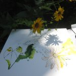 Es ist schwer im Kontrast Sonne und Schatten zu zeichnen (c) Foto von Susanne Haun (2)