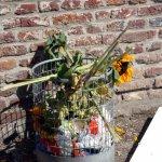 Ein Blumenstück vor einer Ateliertür (c) Foto von Susanne Haun