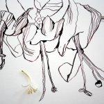 Blüte mit Blüte (c) Foto und Zeichnung von Susanne Haun