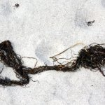 Seetank am Strand (c) Foto von Susanne Haun