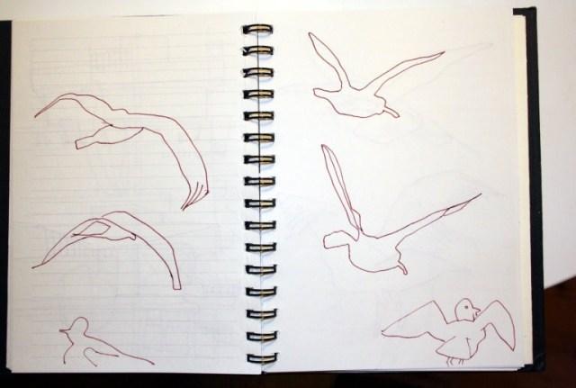 Beobachtungen der Möwen am Gedster (c) Skizzen von Susanne Haun