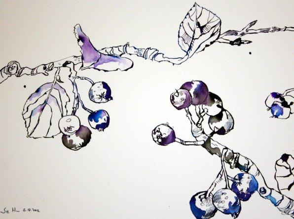 Blaue Vogelbeere 30 x 40 cm Tusche auf Bütten (c) Zeichnung von Susanne Haun
