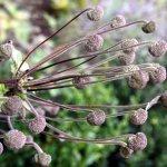 Im Botanisk Have (c) Foto von Susanne Haun