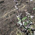 Pflanzen am Gedser (c) Foto von Susanne Haun