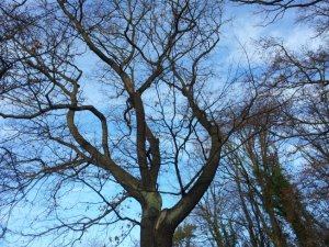 1 In den Himmel schauen (c) Foto von Susanne Haun