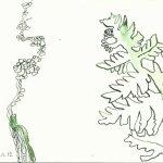 Wald 17 x 22 cm Tusche auf Bütten (c) Zeichnung von Susanne Haun