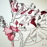 Die Vorstellung der Azalee vor Erfrierung 24 x 32 cm (c) Zeichnung von Susanne Haun