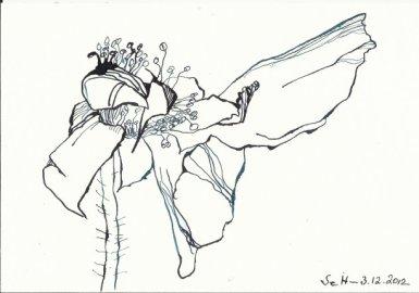 Verblühte Rose Vers. 3 (c) Zeichnung von Susanne Haun