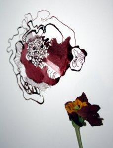 Größenvergleich - das innere der Primel (c) Foto von Susanne Haun