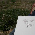 Entstehung Löwenzahn (c) Zeichnung von Susanne Haun