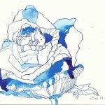 Rosenblüten Version 2 - 22 x 17 cm auf Hahnemühle Burgund Papier (c) Zeichnung von Susanne Haun
