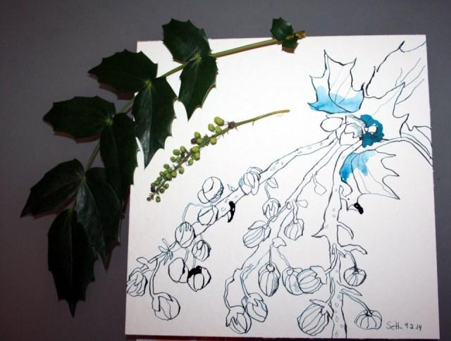 Stechpalme - 15 x 15 cm - Tusche auf Bütten (c) Zeichnung von Susanne Haun